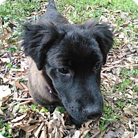 Adopt A Pet :: Teagan - Harrisburg, NC