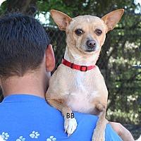 Adopt A Pet :: Aspen - Santa Barbara, CA