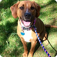 Adopt A Pet :: Zoe in CT - Manchester, CT