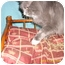 Photo 2 - Maine Coon Cat for adoption in Wilmington, Delaware - Robby