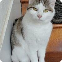 Adopt A Pet :: Miss Kitty - Stuart, VA