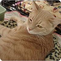 Adopt A Pet :: Jacob & Smokey (declawed) - Chesapeake, VA