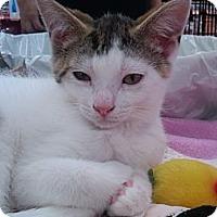 Adopt A Pet :: Spanky - Sterling Hgts, MI