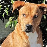 Adopt A Pet :: Sandy - Eustis, FL