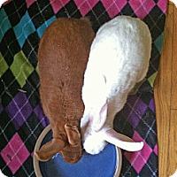 Florida White Mix for adoption in Chicago, Illinois - Desi