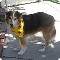 Adopt A Pet :: Snoop Dog - Trabuco Canyon, CA