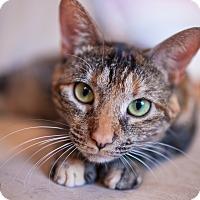 Adopt A Pet :: Kadie - Statesville, NC