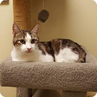 Adopt A Pet :: Pretty Girl - Balto, MD