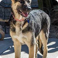 Adopt A Pet :: Mika - Phoenix, AZ
