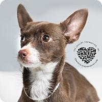 Adopt A Pet :: Tiara - Inglewood, CA
