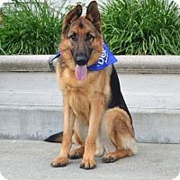 German Shepherd Dog Dog for adoption in San Diego, California - Jack 2