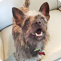 Adopt A Pet :: Masikeo - San Diego, CA