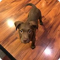 Adopt A Pet :: Rocky - Sacramento, CA