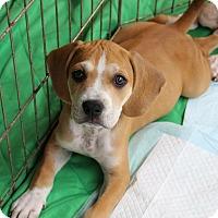 Adopt A Pet :: Maya - Ft. Myers, FL