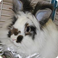 Adopt A Pet :: THUMBELINA - Clayton, NJ