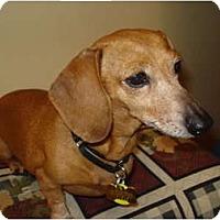Adopt A Pet :: Lulu - San Jose, CA