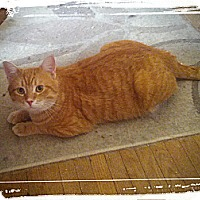 Adopt A Pet :: Carver - london, ON