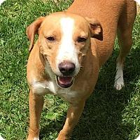 Adopt A Pet :: Peggy Fleming - North Chittenden, VT