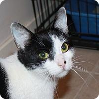 Adopt A Pet :: Roslyn - North Branford, CT