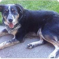 Adopt A Pet :: Abbie - Meridian, ID