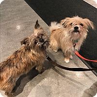 Adopt A Pet :: Diego (pending adoption) - Montreal, QC