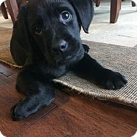 Adopt A Pet :: Leonardo - Waldorf, MD