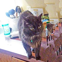 Adopt A Pet :: Sweet Pea - Marion, NC