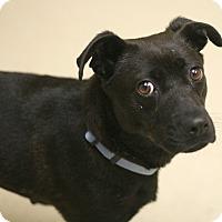Adopt A Pet :: Truffles - Staunton, VA