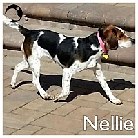 Adopt A Pet :: Nellie - Pittsburgh, PA