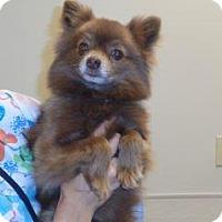 Adopt A Pet :: 339678 LF - Wildomar, CA
