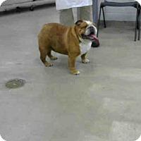 Adopt A Pet :: MOLLY - Houston, TX