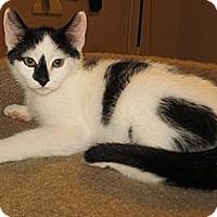 Adopt A Pet :: Rudy - Catasauqua, PA