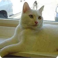 Adopt A Pet :: Sugar - Modesto, CA