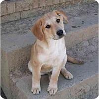 Adopt A Pet :: Rita - Albany, NY