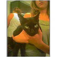 Adopt A Pet :: Miss Kitty (polydactyl - Owasso, OK