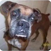 Adopt A Pet :: Calvin - Albany, GA