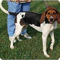 Adopt A Pet :: Lily - Albany, NY