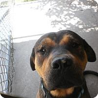 Adopt A Pet :: Roddy - Wallaceburg, ON