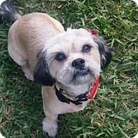 Adopt A Pet :: JACI - Miami, FL