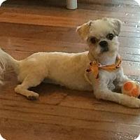Adopt A Pet :: Olaf - Homer Glen, IL