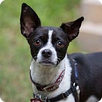 Adopt A Pet :: Ruby Red - Austin, TX