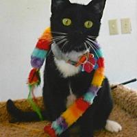 Adopt A Pet :: A-Dulcina - Tyler, TX