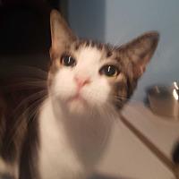 Adopt A Pet :: Calvin - Livonia, MI