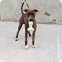 Adopt A Pet :: A22 Marvin - Odessa, TX