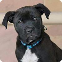 Adopt A Pet :: Spurs - Santa Fe, TX