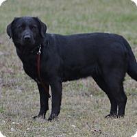 Adopt A Pet :: Lucy - Lebanon, MO