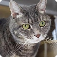 Adopt A Pet :: Phyllis - Denver, CO