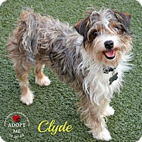 Adopt A Pet :: Clyde - Youngwood, PA