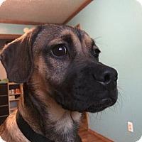 Adopt A Pet :: Ricky - Salem, OR