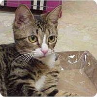 Adopt A Pet :: Stephanie - Deerfield Beach, FL